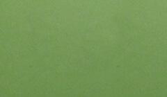 和紙菊すき込み 黄緑裏