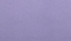 和紙菊すき込み 紫裏